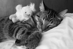 μαύρο λευκό ύπνου γατακιώ Στοκ Εικόνα