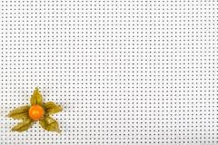 μαύρο λευκό physalis ανασκόπησης Στοκ εικόνες με δικαίωμα ελεύθερης χρήσης