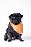 Μαύρο μοντέρνο σκυλί Στοκ φωτογραφία με δικαίωμα ελεύθερης χρήσης