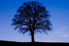 μαύρο μπλε Στοκ Εικόνες