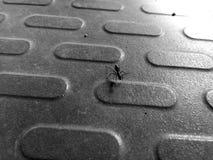 Μαύρο μυρμήγκι Στοκ Εικόνα