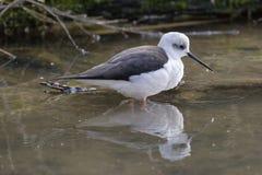 www μεγάλο πουλί στο μουνί