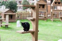 Μαύρο παίζοντας παιχνίδι γατών στον κήπο Στοκ Εικόνες