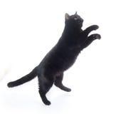 μαύρο παιχνίδι γατών στοκ εικόνες