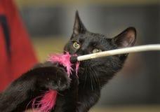 μαύρο παιχνίδι γατών Στοκ Φωτογραφία
