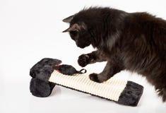 μαύρο παιχνίδι γατών Στοκ φωτογραφία με δικαίωμα ελεύθερης χρήσης