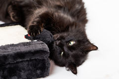 μαύρο παιχνίδι γατών Στοκ εικόνα με δικαίωμα ελεύθερης χρήσης