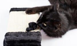μαύρο παιχνίδι γατών Στοκ Φωτογραφίες