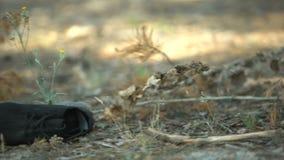 Μαύρο παπούτσι που βρίσκεται στη δασική χλόη κοντά στο πτώμα, δολοφονία συμβάσεων, θύμα δολοφόνων απόθεμα βίντεο
