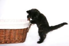 μαύρο περίεργο γατάκι Στοκ φωτογραφία με δικαίωμα ελεύθερης χρήσης