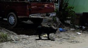 Μαύρο περιπλανώμενο σκυλί της μικτής φυλής, κεράσι-χρωματισμένο αυτοκίνητο εμπορικών σημάτων της Toyota, απορρίμματα στην οδό, νύ στοκ εικόνες με δικαίωμα ελεύθερης χρήσης