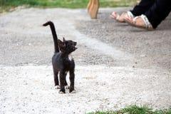 Μαύρο περιπλανώμενο meowing γατάκι φωτογραφιών Στοκ φωτογραφίες με δικαίωμα ελεύθερης χρήσης