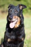 μαύρο πορτρέτο σκυλιών Στοκ φωτογραφία με δικαίωμα ελεύθερης χρήσης
