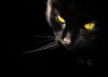 Μαύρο πορτρέτο της μαύρης γάτας Στοκ φωτογραφία με δικαίωμα ελεύθερης χρήσης