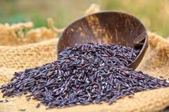 μαύρο ρύζι Στοκ Φωτογραφία