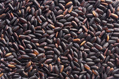 μαύρο ρύζι Στοκ εικόνα με δικαίωμα ελεύθερης χρήσης