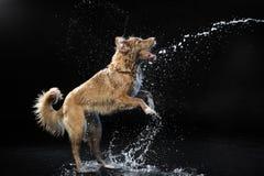 μαύρο σκυλί ανασκόπησης Στοκ φωτογραφία με δικαίωμα ελεύθερης χρήσης