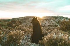 Μαύρο σκυλί στο ηλιοβασίλεμα στοκ φωτογραφία με δικαίωμα ελεύθερης χρήσης
