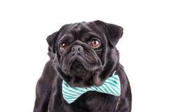 Μαύρο σκυλί με έναν δεσμό Στοκ εικόνα με δικαίωμα ελεύθερης χρήσης