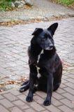 Μαύρο σκυλί που βρίσκεται στο δρόμο πετρών Στοκ Φωτογραφίες