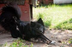 Μαύρο σκυλί που μένει κοντά στο σκυλόσπιτο Στοκ Φωτογραφία