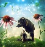 Μαύρο σκυλί σε μια κορυφή υψώματος φαντασίας με τα λουλούδια echinacea Στοκ Εικόνες