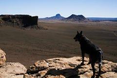 Μαύρο σκυλί στους απότομους βράχους Νέων Μεξικό στοκ φωτογραφίες