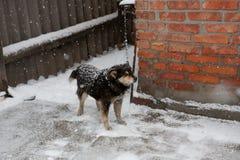 Μαύρο σκυλί στο χιόνι στην αλυσίδα με ένα περιλαίμιο στοκ φωτογραφία με δικαίωμα ελεύθερης χρήσης