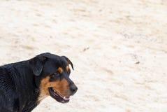 μαύρο σκυλί Στοκ εικόνες με δικαίωμα ελεύθερης χρήσης
