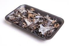 Μαύρο σύνολο δίσκων πολυαιθυλένιου του κέρατου των μανιταριών αφθονίας Στοκ φωτογραφίες με δικαίωμα ελεύθερης χρήσης