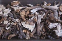Μαύρο σύνολο δίσκων πολυαιθυλένιου του κέρατου των μανιταριών αφθονίας Στοκ φωτογραφία με δικαίωμα ελεύθερης χρήσης