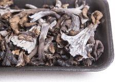 Μαύρο σύνολο δίσκων πολυαιθυλένιου του κέρατου των μανιταριών αφθονίας Στοκ εικόνες με δικαίωμα ελεύθερης χρήσης
