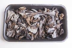 Μαύρο σύνολο δίσκων πολυαιθυλένιου του κέρατου των μανιταριών αφθονίας Στοκ Εικόνες