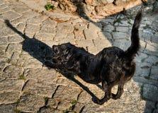 Μαύρο τέντωμα σκυλιών, που πετά μια μακριά σκιά στοκ εικόνα
