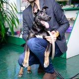 Μαύρο τσοπανόσκυλο διασταύρωσης με ένα πρόσωπο στοκ φωτογραφία