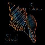Μαύρο υπόβαθρο κοχυλιών θάλασσας διανυσματική απεικόνιση