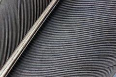μαύρο φτερό κοράκων Στοκ φωτογραφίες με δικαίωμα ελεύθερης χρήσης