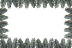 Μαύρο φτερό Στοκ εικόνες με δικαίωμα ελεύθερης χρήσης