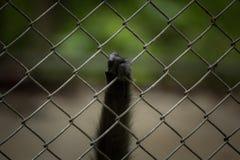 μαύρο χέρι Στοκ φωτογραφίες με δικαίωμα ελεύθερης χρήσης