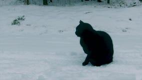 μαύρο χιόνι γατών φιλμ μικρού μήκους