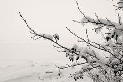 μαύρο χιόνι κλάδων Στοκ Εικόνες