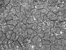 Μαύρο χώμα στις ρωγμές με τα ξηρά πέταλα στοκ εικόνα με δικαίωμα ελεύθερης χρήσης