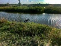 μαύρο anhinga που λιάζει τα φτερά στην ακτή Στοκ εικόνα με δικαίωμα ελεύθερης χρήσης