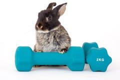 μαύρο bunny βάρος Στοκ Φωτογραφίες