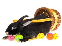 μαύρο bunny Πάσχα καλαθιών μέσα Στοκ Φωτογραφίες
