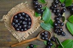 Μαύρο chokeberry melanocarpa Aronia Στοκ εικόνες με δικαίωμα ελεύθερης χρήσης