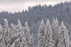 μαύρο feldberg δασική Γερμανία Στοκ φωτογραφία με δικαίωμα ελεύθερης χρήσης