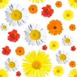 μαύρο floral πρότυπο άνευ ραφής Στοκ φωτογραφίες με δικαίωμα ελεύθερης χρήσης