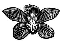 Μαύρο orchid λουλούδι Στοκ φωτογραφίες με δικαίωμα ελεύθερης χρήσης