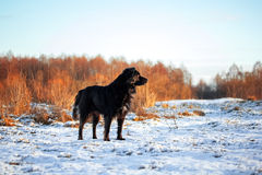 Μαύρο pooch Στοκ φωτογραφία με δικαίωμα ελεύθερης χρήσης